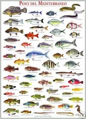 pesci_med.JPG